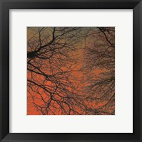 Sunset Forest III Framed Print