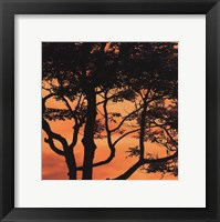 Sunset Forest IV Framed Print