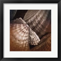 Framed Ocean Treasures I