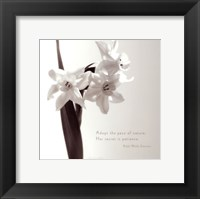 Framed Daffodil Secrets