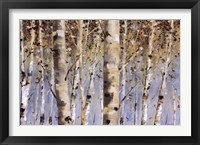 Framed White Forest I