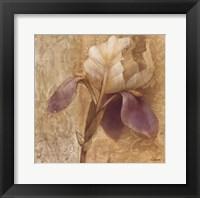 Framed Brocade Iris