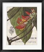 Framed Botanique Tropicale I