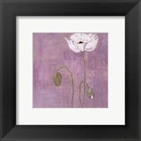 Poppy lll Framed Print