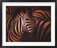 Framed Zebra Grande