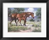Framed Horse and Colt