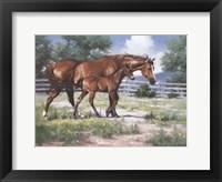 Framed Horse and Colt