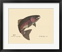 Framed Rainbow Trout