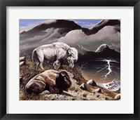 Framed Mountain Bison