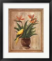 Framed Bird of Paradise
