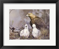 Framed Golden Eagle Nesting