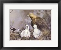 Framed Golden Eagle Nesting