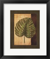 Palm Tropical IV Framed Print