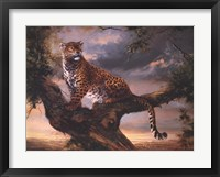 Framed Leopard In Tree