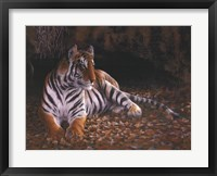 Tiger's Lair Framed Print