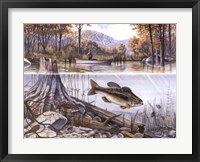 Trout Underwater Framed Print