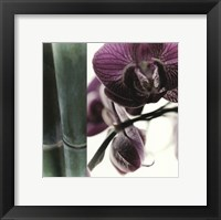 Framed Bamboo I (Flower I)