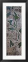 Transparent Leaves II Framed Print