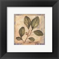 Leaf Botanicals IV - petite Framed Print