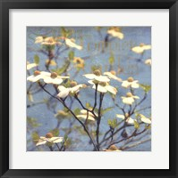 Dogwood I Framed Print