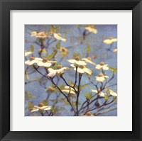 Dogwood I - mini Framed Print