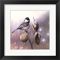 Framed Chickadee and Milkweed