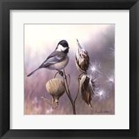 Framed Chickadee and Milkweed