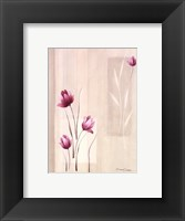 Shades Of Pink ll Framed Print