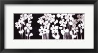 Framed White Flowers on Black I