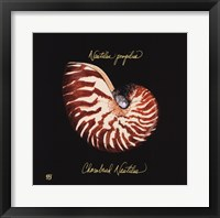 Framed Striking Shells II