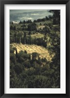 Framed Tuscan Vineyard