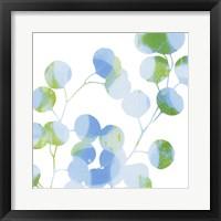 Blue Plums II Framed Print