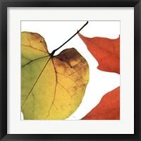 Framed Inflorescent Leaves I