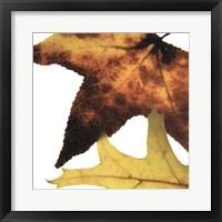 Framed Inflorescent Leaves II