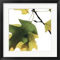 Framed Inflorescent Leaves III