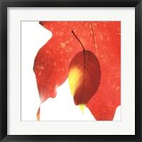 Framed Inflorescent Leaves IV