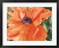 Framed Fading Poppy