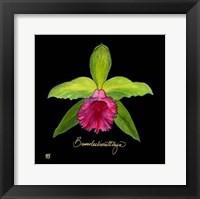 Framed Vivid Orchid I