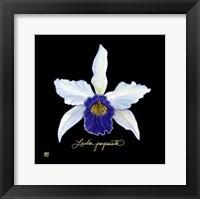 Framed Vivid Orchid IV