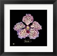 Framed Vivid Orchid V