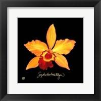 Framed Vivid Orchid VI