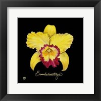 Framed Vivid Orchid VII