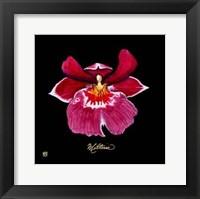 Framed Vivid Orchid VIII