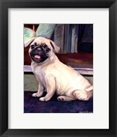 Framed Baby Pug