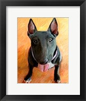 Framed Bull Terrier Rhino