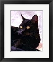 Framed Black Cat Portrait