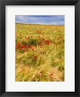 Framed Poppies in Field II