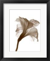 Framed Inflorescence I