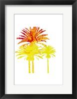 Sunny Palm II Framed Print