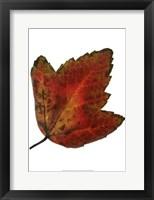 Framed Leaf Inflorescence I